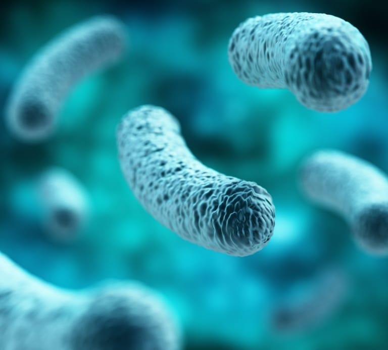 Close-up photo of a germ